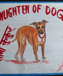 1324068839_Italian Greyhound