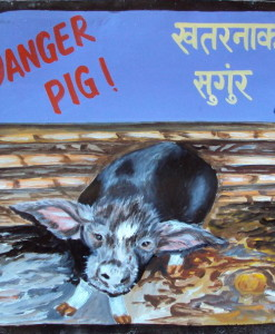 1324415853_Danger Pig by Sagar