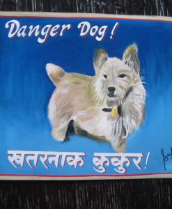 1324762203_Sufraj-Norwich-Terrier-Scamper-1
