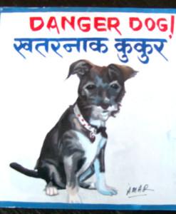 1324939830_Gracie.Terrier.Amar