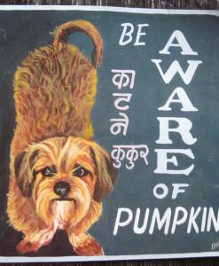 1325017685_Indra  Pumpkin Terrier Dachshund