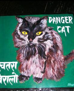 1325030084_Queenie-Black-Cat-Sagar-1