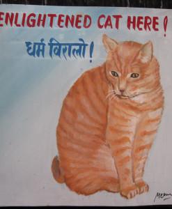 1325054753_Megh-Raj-Ginger-Cat-Tony-1