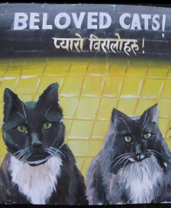 1325055128_Megh-Raj-Maizy-Demian-Black-Cats-1