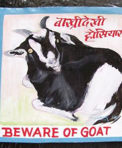1327362234_Goat