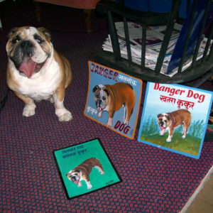 Brocco the Bulldog with his 3 portraits