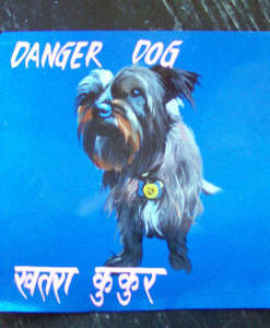 1330715577_Rudy.Terrier.Nara