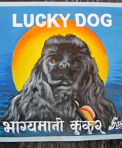 1356567652_Lucky.BlackCockerSpaniel.Sagar.sq