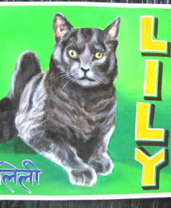 1370289004_Lily.GreyCat.Sagar