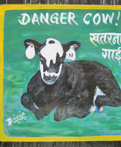 1387492807_Cow.Dilip