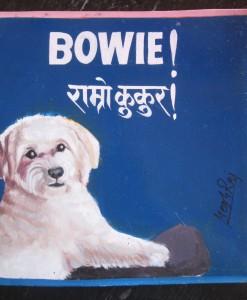 1389068768_Bowie.Havanese