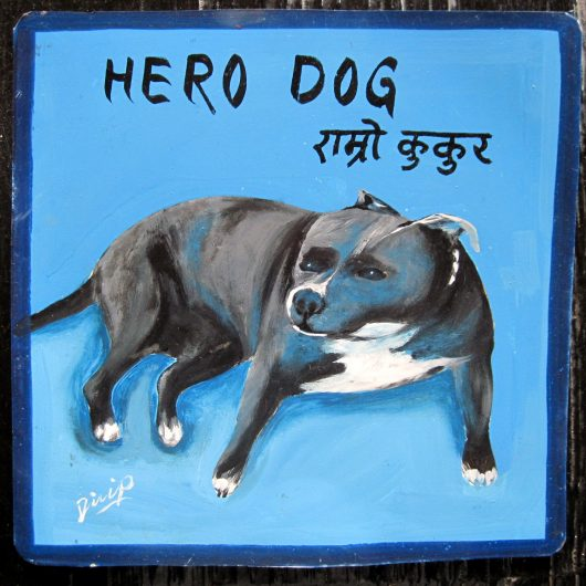 Hero dog. Folk art be aware of pit bull sign hand painted on metal by a signboard artist in Nepal.