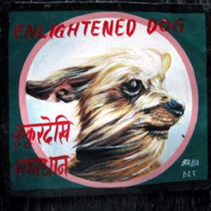 Yorkshire Terriers Nepal Dog