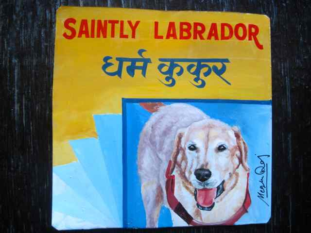 White Lab dog portrait