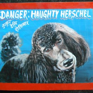 Beware of Black Standard Poodle